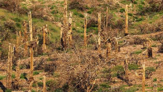 fungal-disease-on-the-rise-in-west-possibly-tied-to-changing-climate-patterns:-experts